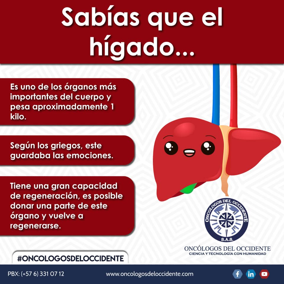 Sabías que el Hígado …